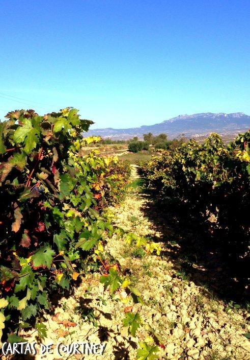 Bodegas Lecea, San Asensio, Rioja